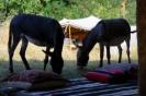 Die beiden Esel unterhielten unsere Gäste am laufenden Band