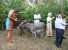 Unsere Gäste spaßten mit den Eseln
